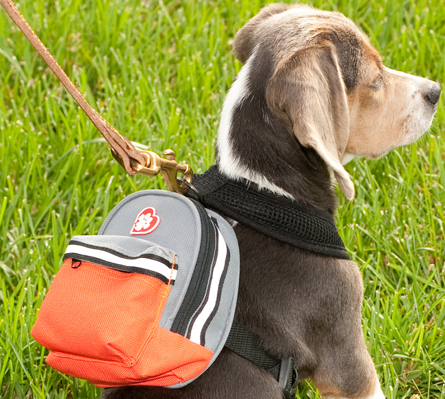 Backpacks For Extra Small Dogs