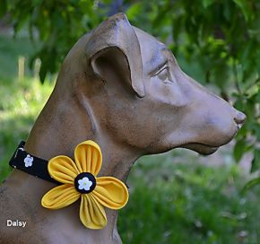 Barking Bitches Diasy Dog Collar.jpg
