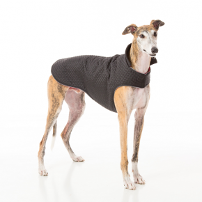 Barking Bitches Greyhound Coat.png