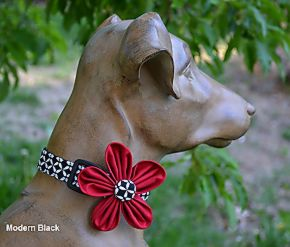 Barking Bitches Modern Black Dog Collar.jpg
