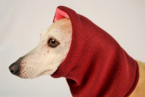 Dog Snood v2.png