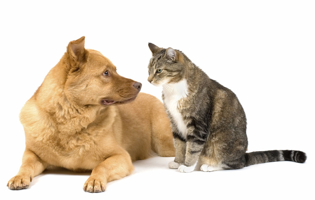 how to stop dog barking at cat
