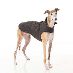 greyhound-coat