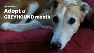 April-is-Adopt-a-Greyhound-Month
