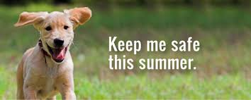 Summer Heat and Dogs
