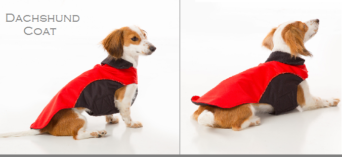 dachshund-coat-1