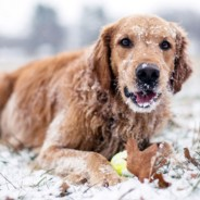 Winter Safety Tips For Your Dogs