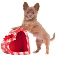 5 Ways to Spend Valentine's Day With Your Pets
